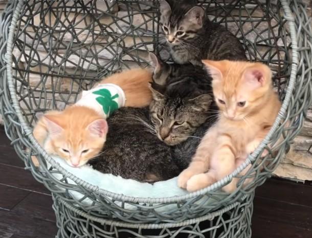 2 4 - Как бездомный котёнок заботится о дедушке-коте