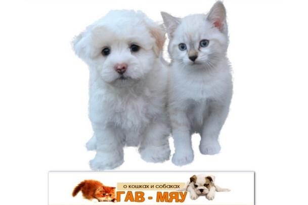 Интересное о кошках и собаках