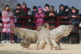Россияне отметили Масленицу ледяным обливанием и гусиными боями