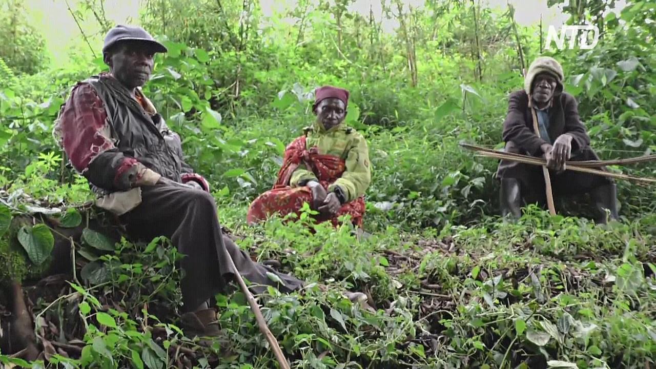 Бывшее лесное племя предупреждает: растения исчезают