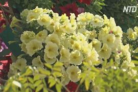 В засушливой Иордании к фестивалю вырастили 700 тысяч цветов