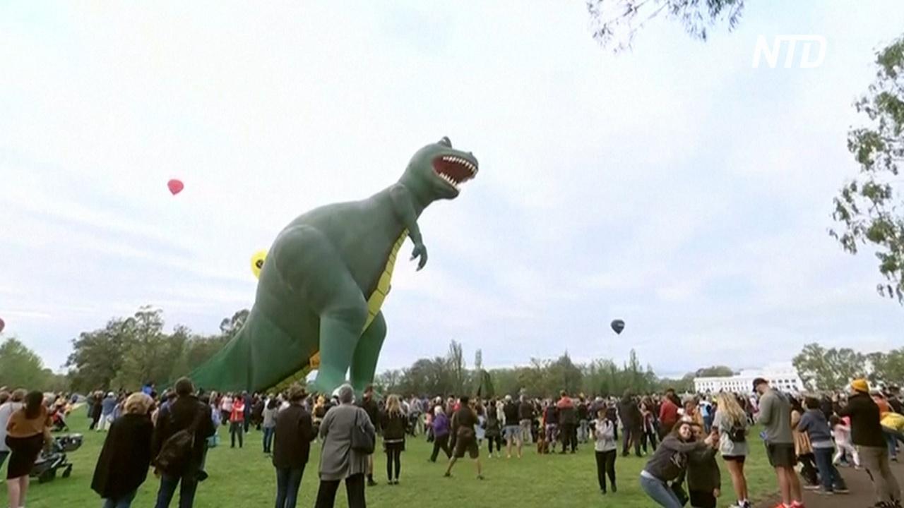 40-метровый аэростат-тираннозавр стал украшением фестиваля в Канберре