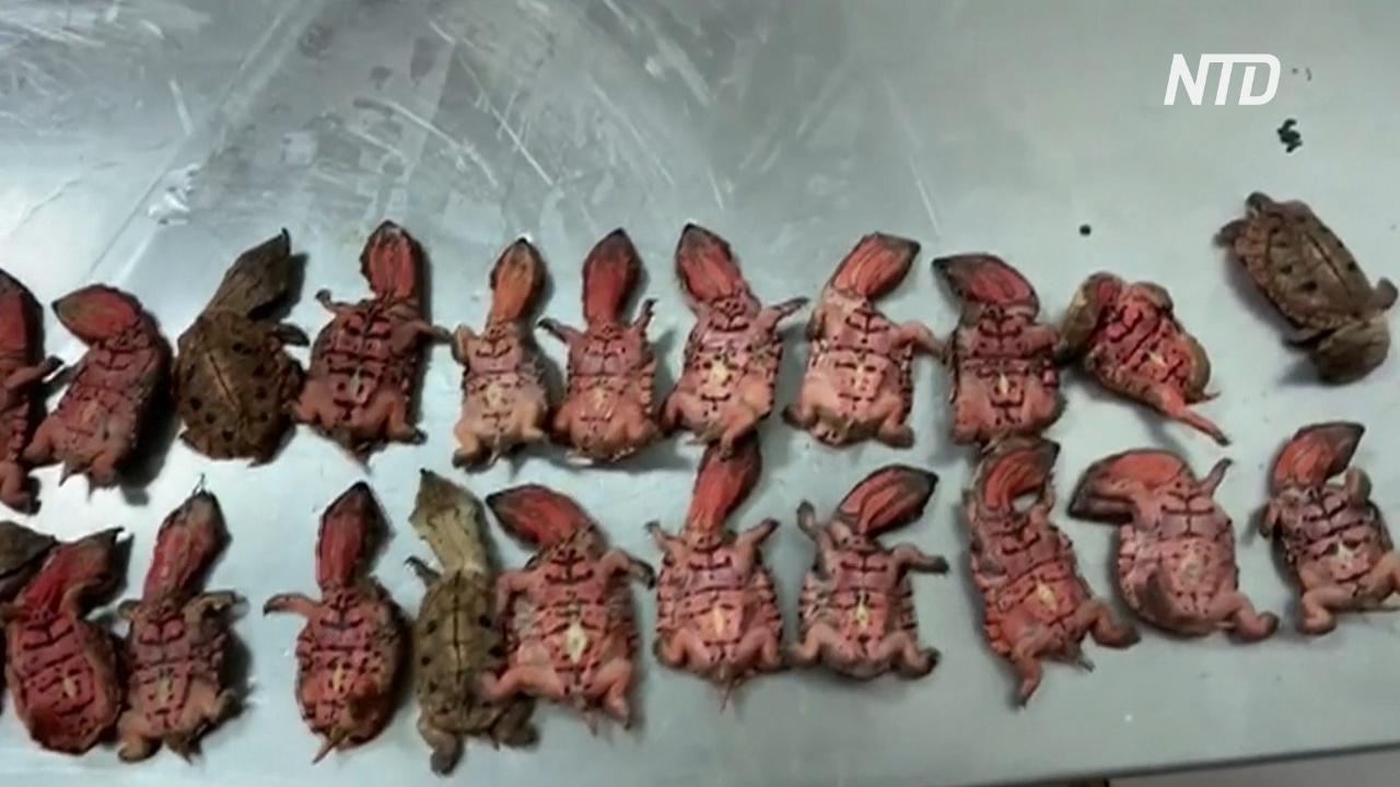 В Колумбии поймали контрабандистов, перевозивших черепах на 250 тысяч долларов