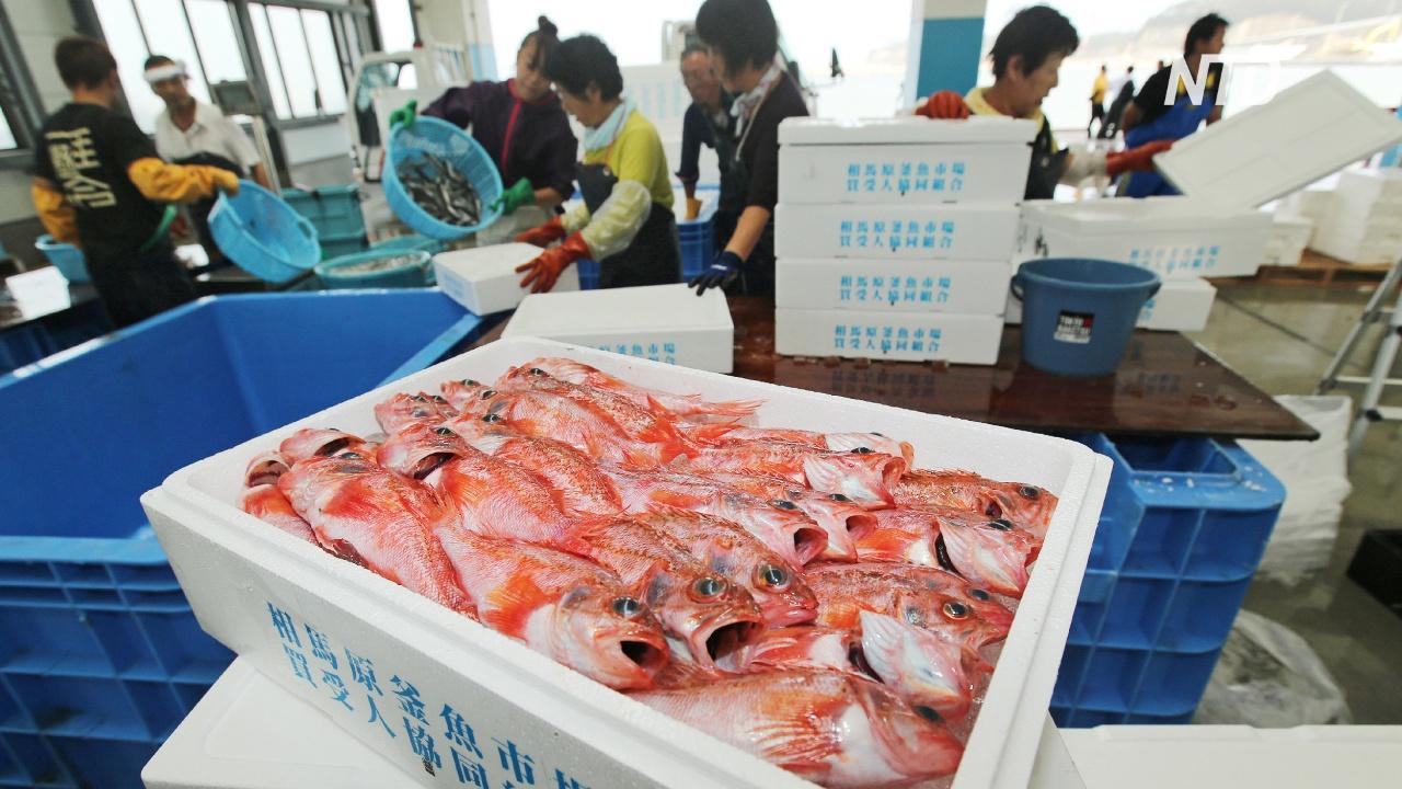 Рыболовная отрасль Фукусимы боится слива отработанной воды с АЭС в море