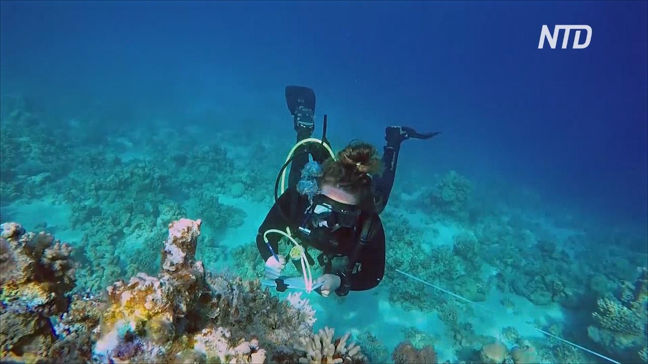 В Египте наблюдают за коралловым рифом, который может стать последним на Земле