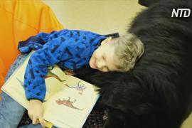 Собаки и крысы помогают эстонским детям учиться читать вслух