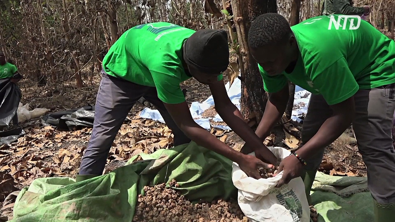 Кот-д'Ивуар восстанавливает потерянные леса