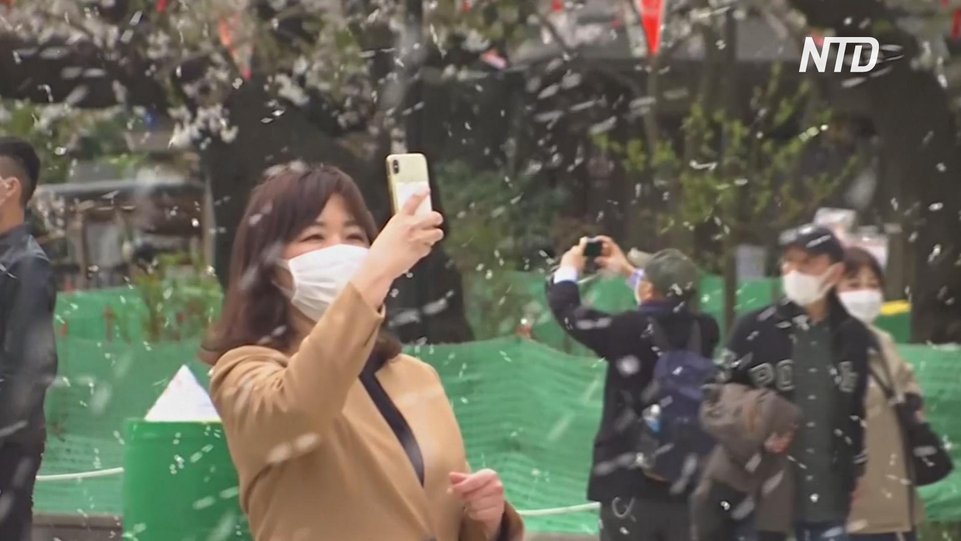 Плюсы карантина: японцы любуются сакурой в спокойной обстановке