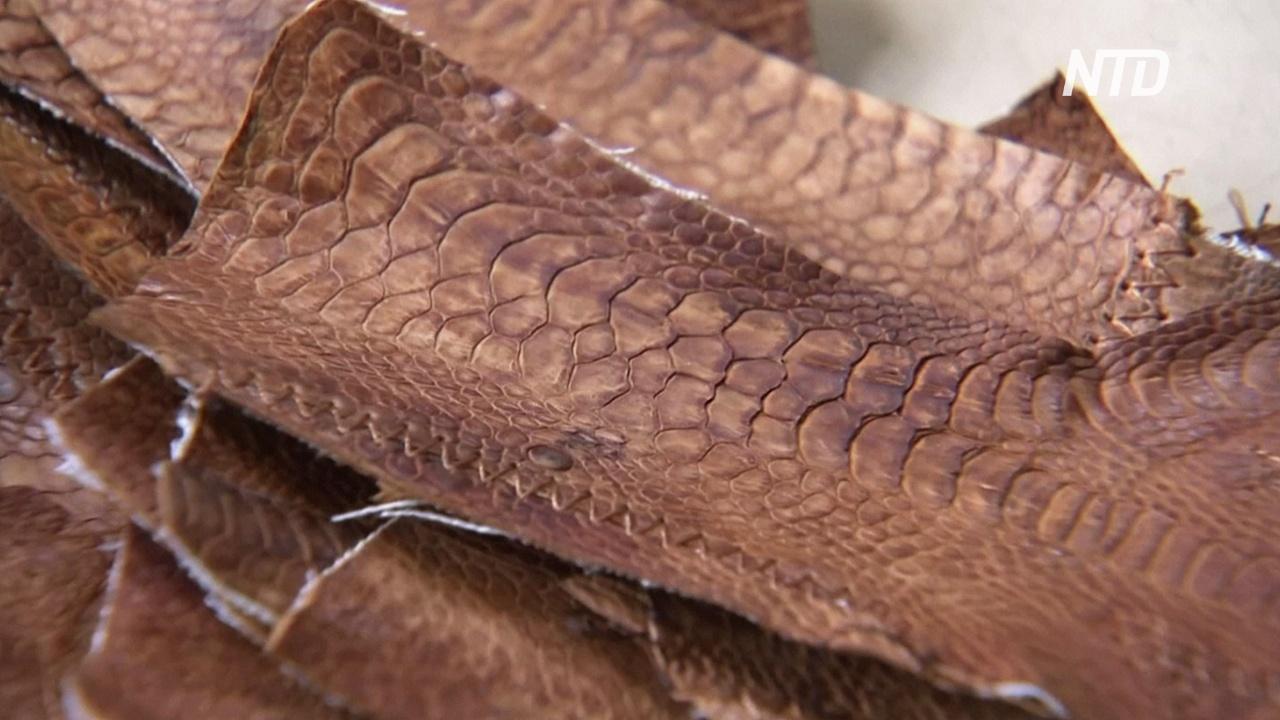 Почему индонезиец делает ботинки из кожи с куриных лапок