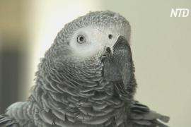 В Израиле супруги научили попугая предупреждать мир об опасности коронавируса