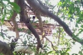 Индийские рабочие вынуждены самоизолироваться на деревьях