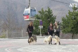 В Красной Поляне временно закрылись горнолыжные курорты