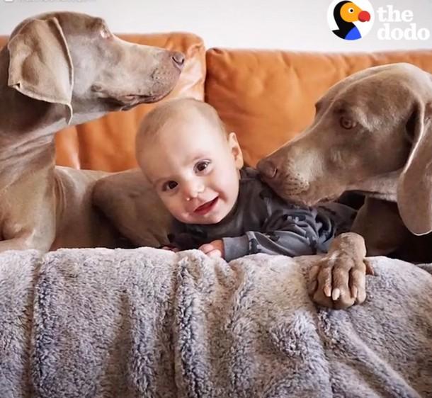 3 1 - Новорождённый и собаки стали неразлучными. Трогательные фото