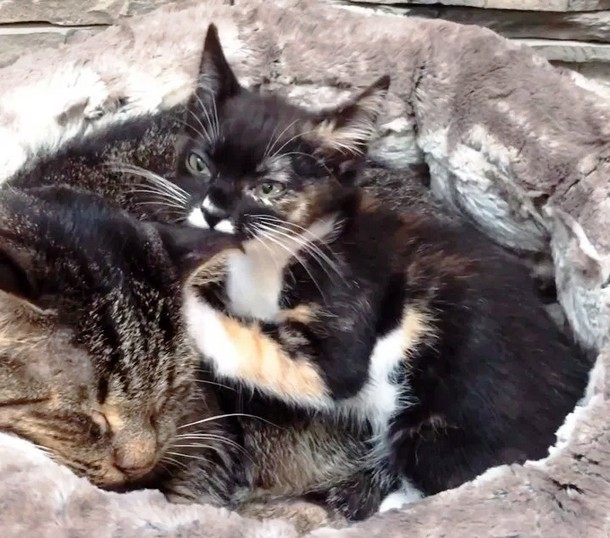 3 4 - Как бездомный котёнок заботится о дедушке-коте