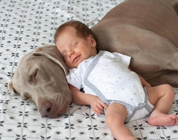 4 1 - Новорождённый и собаки стали неразлучными. Трогательные фото
