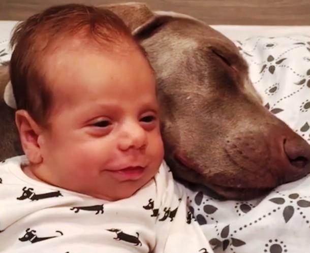 5 1 - Новорождённый и собаки стали неразлучными. Трогательные фото