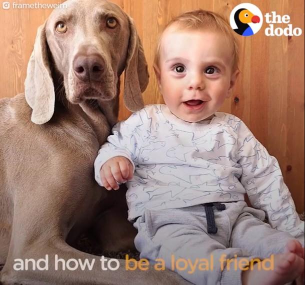7 - Новорождённый и собаки стали неразлучными. Трогательные фото