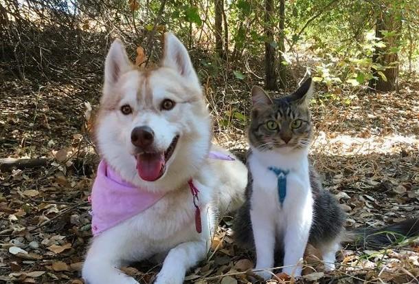 8 2 - Как ведёт себя кошка, которую воспитали собаки