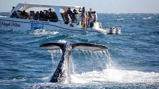 Kity v Dominikane - Курс – на Доминикану
