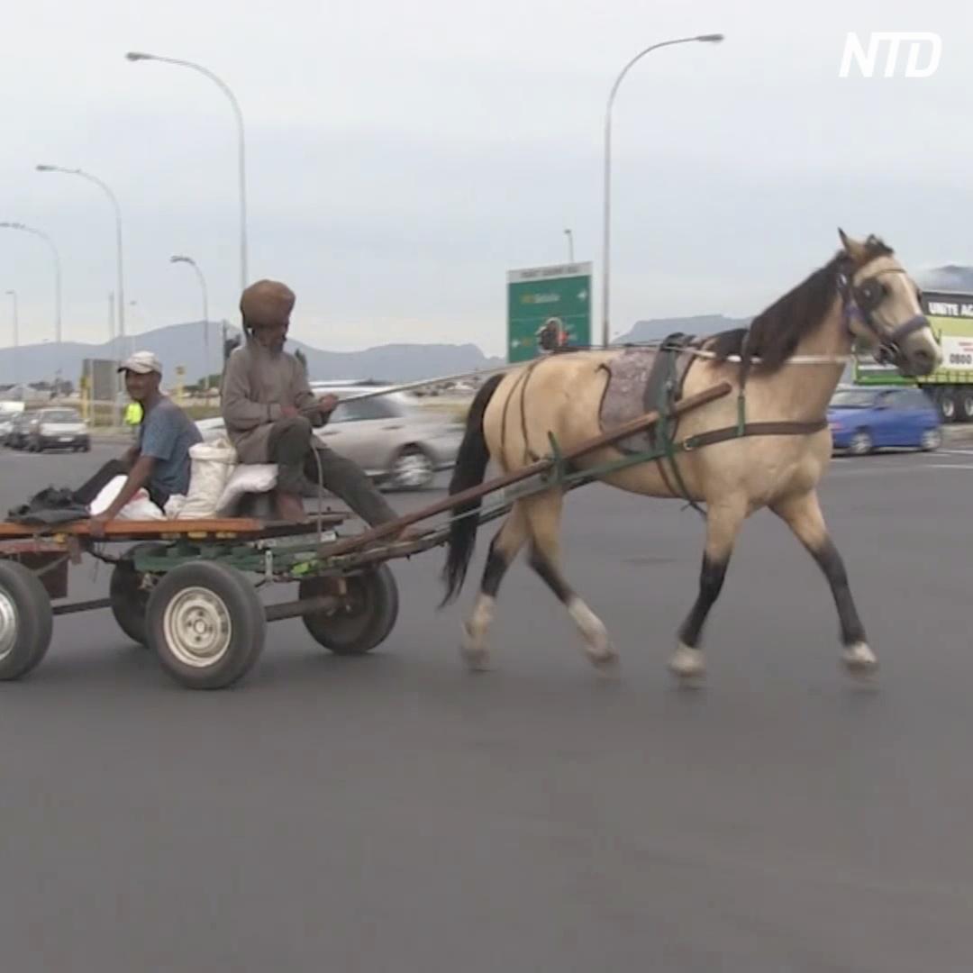 Рабочие лошади по-прежнему ездят по дорогам Кейптауна