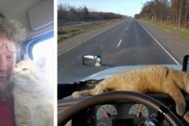 Бездомный кот стал спутником дальнобойщика