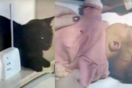 Кошка издаёт странные звуки и спасает младенца