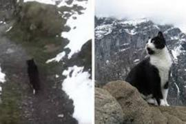 Как кошка спасла туриста в горах
