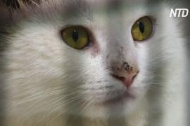 Приют в Ливане пытается справиться с растущим числом брошенных животных