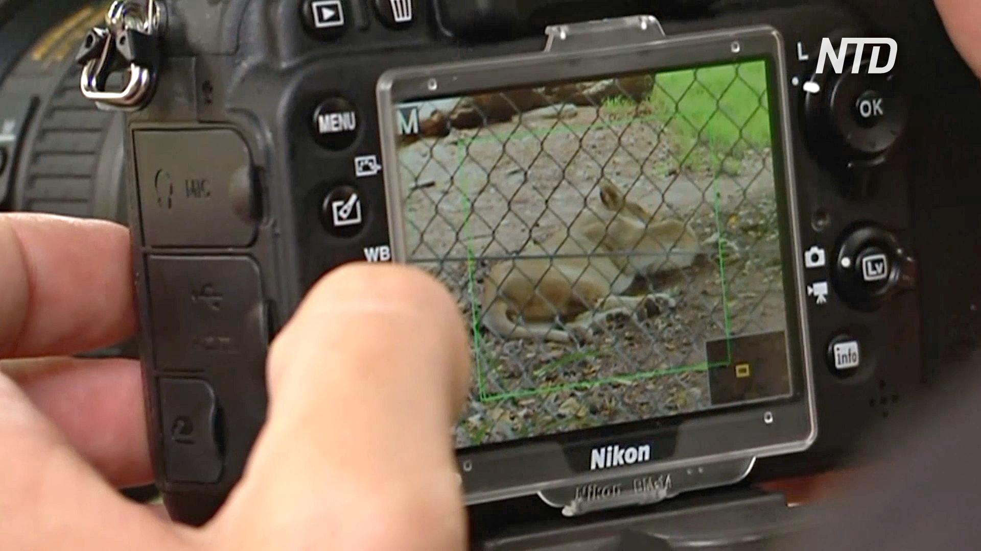 В зоопарке Аделаиды проверяют сердце хищников с помощью цифровой камеры