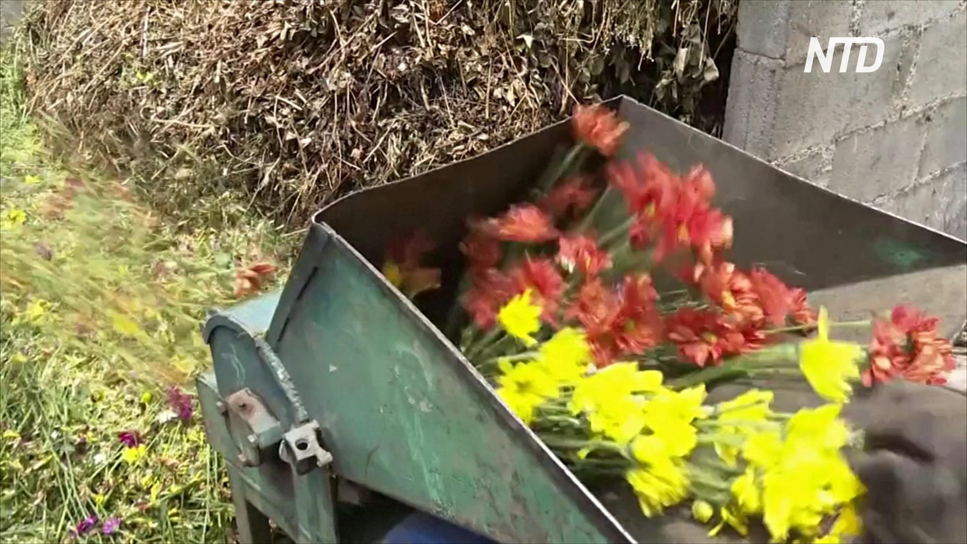Тысячи цветов на Коста-Рике выбрасывают из-за карантина