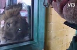 Что происходит в Лондонском зоопарке во время карантина
