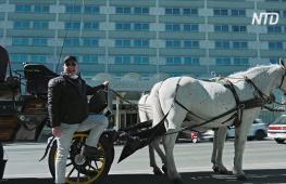 Туристические лошадиные повозки Вены теперь развозят бесплатную еду