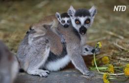 Алматинский зоопарк живёт прежней жизнью, но без гостей