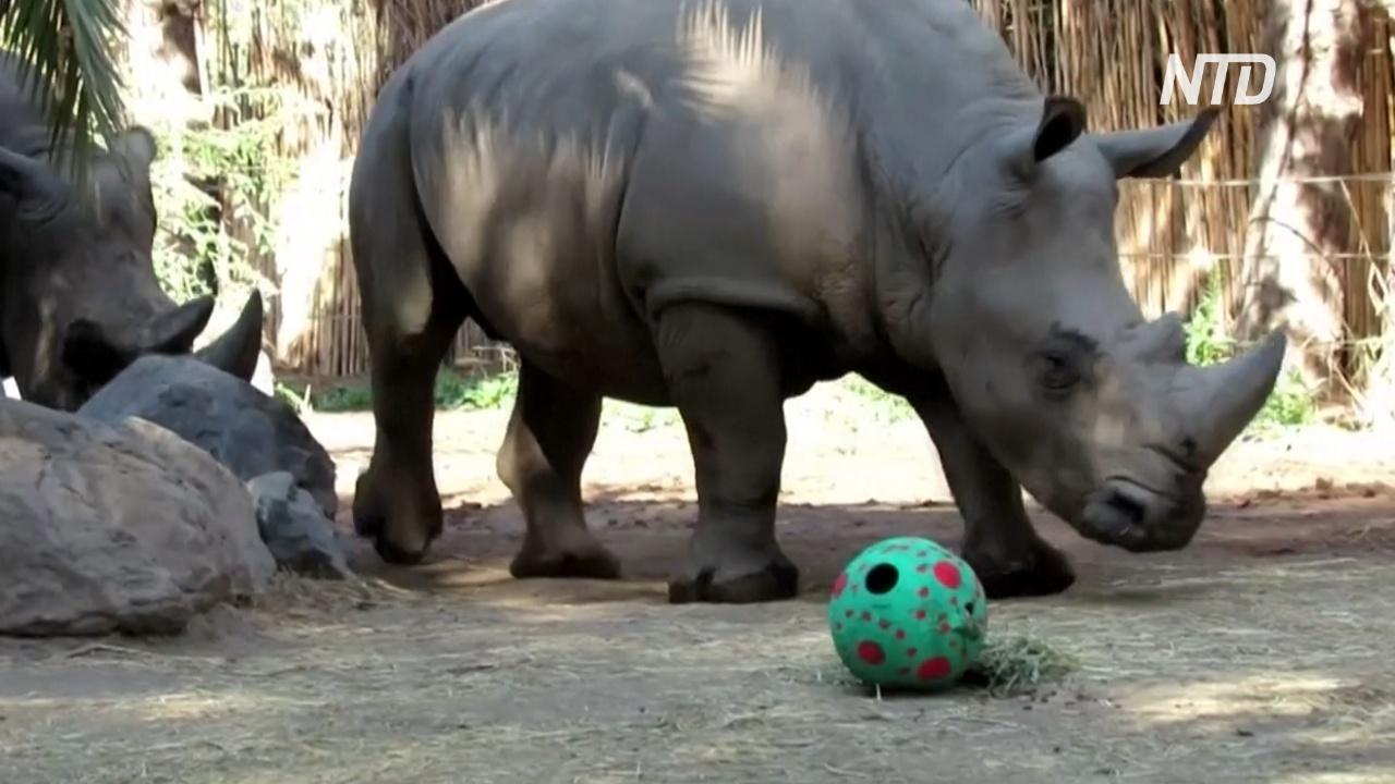 Яйца мясные и фруктовые: животные в чилийском зоопарке празднуют пасху