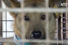 В России из-за карантина приютские собаки оказались на грани голода