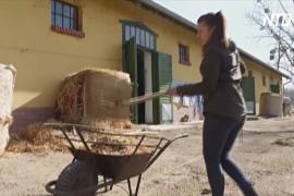 Проект «План Б» помогает венграм найти работу во время карантина