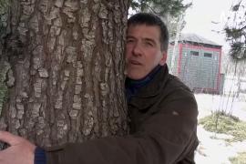 Обними дерево: исландские лесничие посоветовали лекарство от хандры
