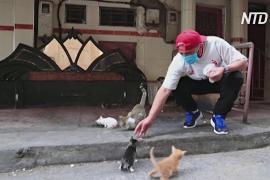 «Мы не одни на планете»: марокканец во время карантина кормит уличных кошек