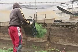 Итальянские фермеры вынуждены уничтожать урожай