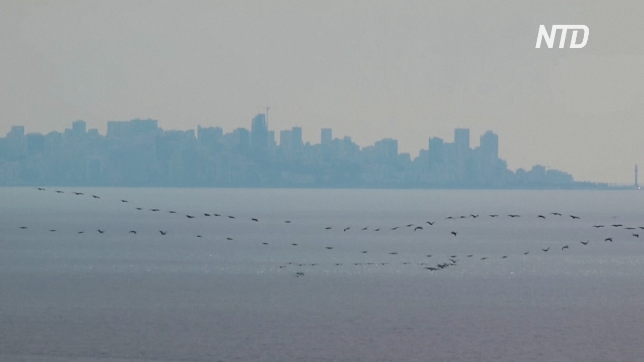 Перелётные птицы останавливаются в уснувших городах Ливана