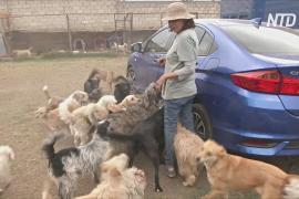 Найти друга на время карантина: мексиканцы забирают собак из приютов