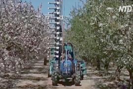 В Израиле придумали искусственный опылитель, чтобы заменить пчёл