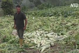 Венесуэльские фермеры выбрасывают сотни тонн своей продукции