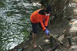 Индонезиец живёт в самоизоляции в лесу и очищает реку
