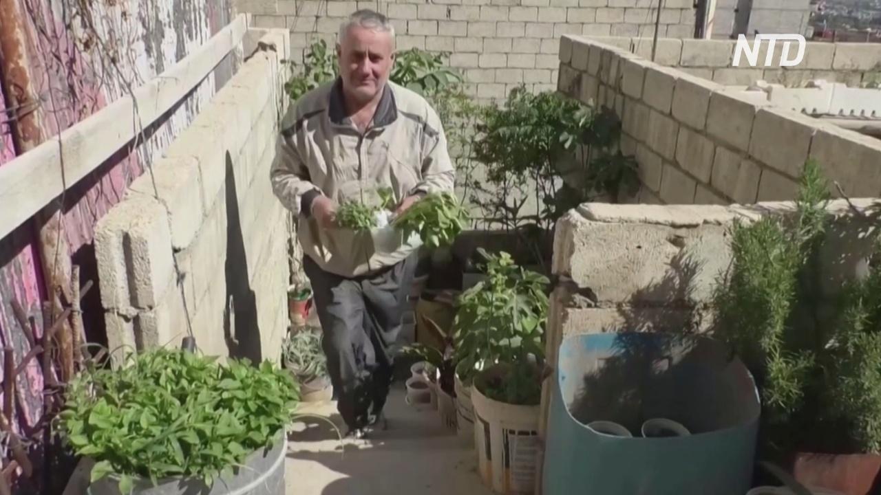 Ферма на крыше помогает сирийцу кормить семью