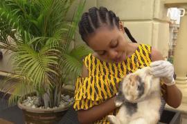 В Нигерии покупают кроликов, чтобы не скучать на карантине