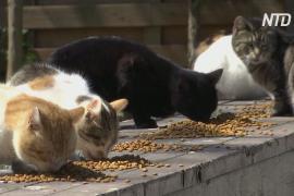 В Стамбуле власти стали чаще кормить бездомных кошек
