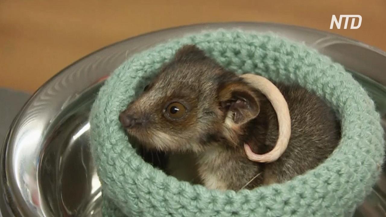 Австралийские супруги выхаживают животных, пострадавших от лесных пожаров