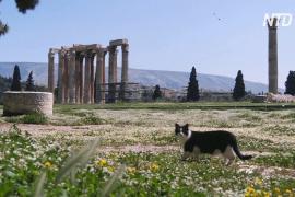 Греки сидят на карантине, а весна вступает в свои права