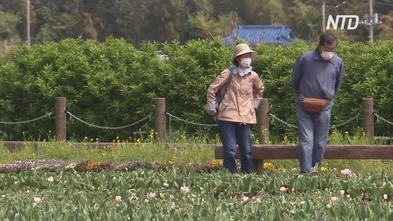 В японском парке срезали 100 000 тюльпанов, чтобы они не привлекали людей